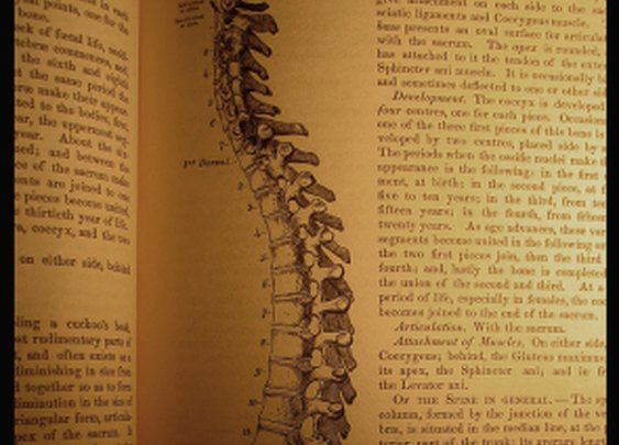 Journal of the American Medical Association recommends Chiropractic - Dr David H Mruz's Blog - Greer-Taylors, SC  Patch