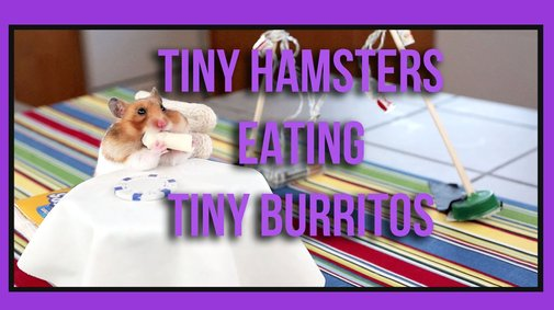 Tiny Hamsters Eating Tiny Burritos - Episode 1
