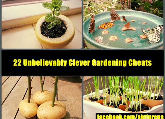 22 Unbelievably Clever Gardening Cheats - SHTF Preparedness