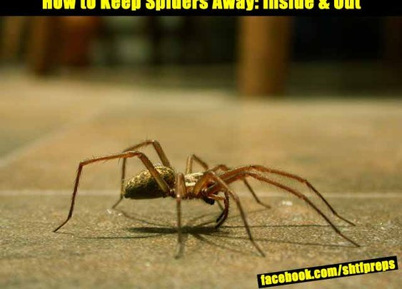 How to Keep Spiders Away: Inside And Out - SHTF Preparedness