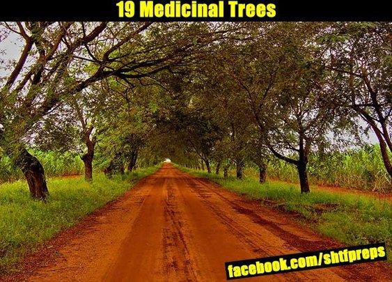 19 Medicinal Trees - SHTF Preparedness