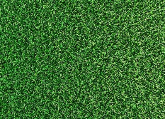 Top 5 Tips for a Greener Lawn - Bob Vila