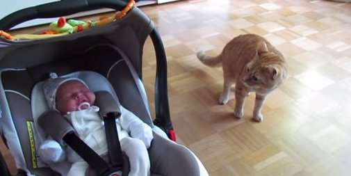 Cat Meets Baby For The First Time, Clearly Doesn't Know What A Baby Is
