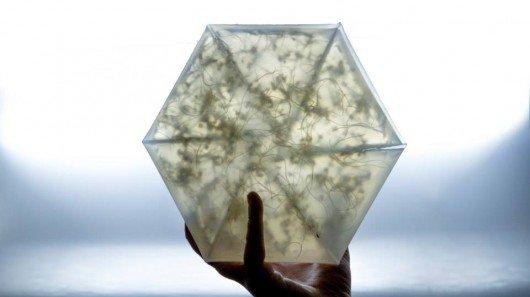 Origami-like mini-greenhouse lets urbanites grow their own microgreens