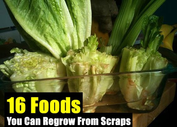 16 Foods You Can Regrow From Scraps - SHTF Preparedness