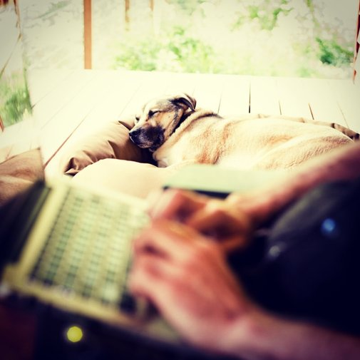 Working from home: it's a dog's life.