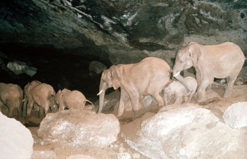 Kitum Cave   Atlas Obscura