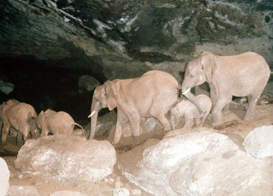 Kitum Cave | Atlas Obscura