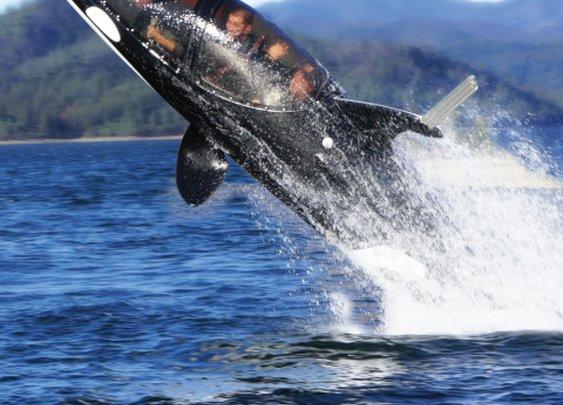 The Killer Whale Submarine - Hammacher Schlemmer   Keep.com