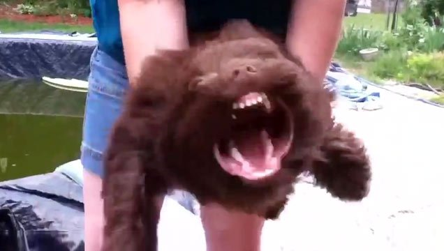 Cute Dog Transforms With Help Of Leafblower - Video