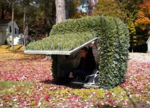 Shelter Hidden as Yard Bush | StashVault