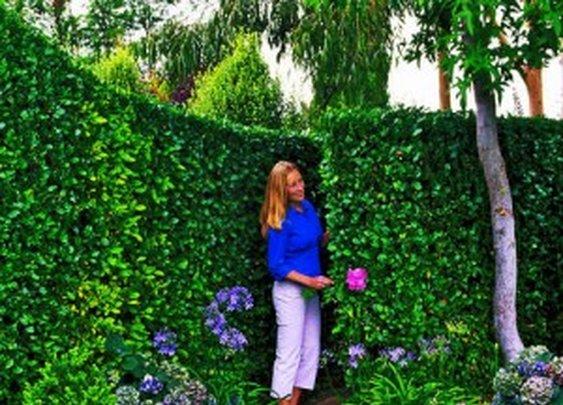 Secret Garden Pathway | StashVault