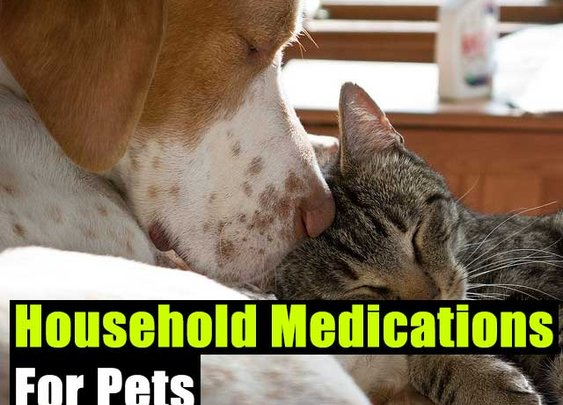 Household Medications For Pets - SHTF Preparedness