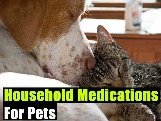Household Medications For Pets - SHTF Preparedness