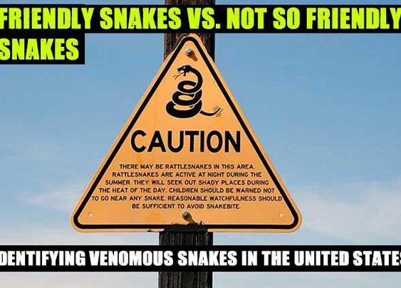 Friendly Snakes Vs. Not So Friendly Snakes - SHTF Preparedness