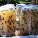 Easy no mess mason jar beehive