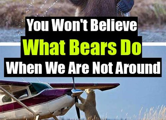 You Won't Believe What Bears Do When We Are Not Around - SHTF Preparedness