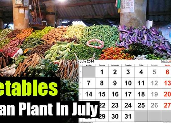 Vegetables You Can Plant In July - SHTF Preparedness
