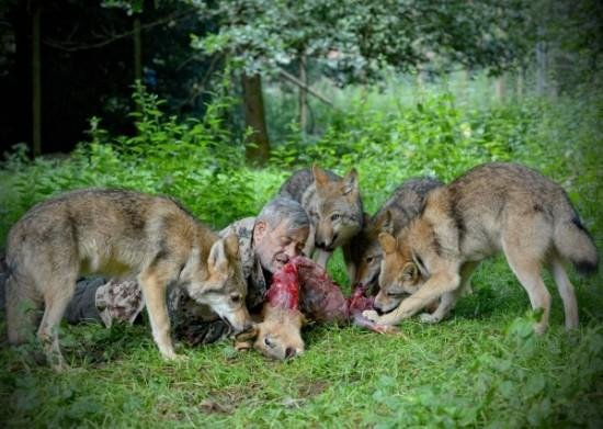 Raw Holistic Health : Living with the Wolves – The Amazing Story of Werner Freund