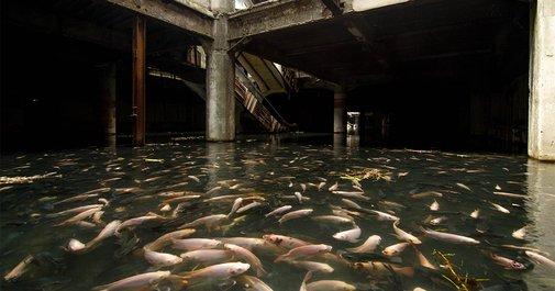 An Abandoned Bangkok Shopping Mall Hides a Fishy Secret