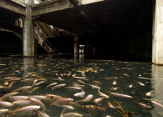 An Abandoned Bangkok Shopping Mall Hides a Fishy Secret