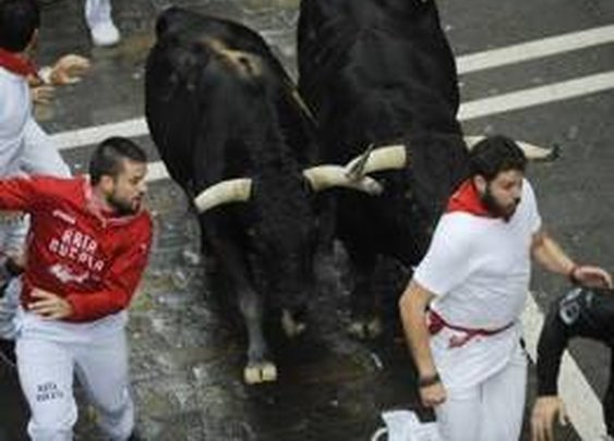 Straggling bull gores Pamplona survival guide author