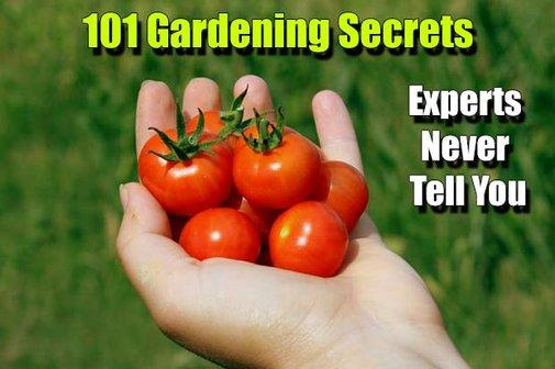 101 Gardening Secrets Experts Never Tell You - SHTF Preparedness