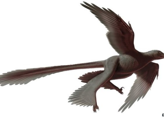 BBC News - Four-winged dinosaur is 'biggest ever'