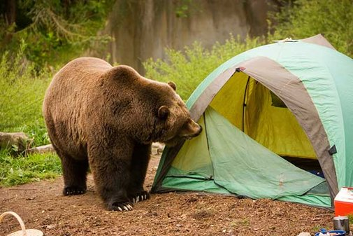 How To Camp BEAR-FREE  | Info You Should Know