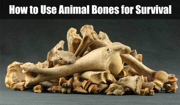 How to Use Animal Bones for Survival - SHTF, Emergency Preparedness, Survival Prepping, Homesteading