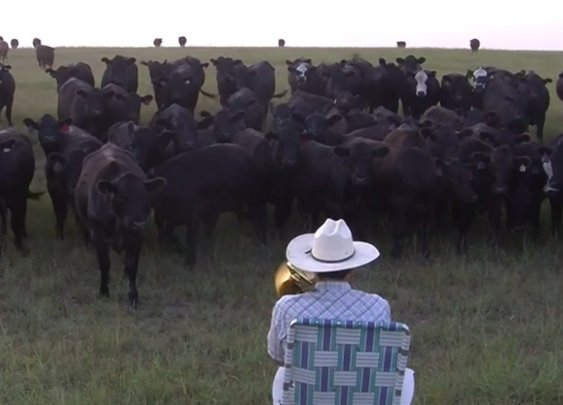 Cows Come Running To Hear Farmer Play Lorde's 'Royals' On Trombone