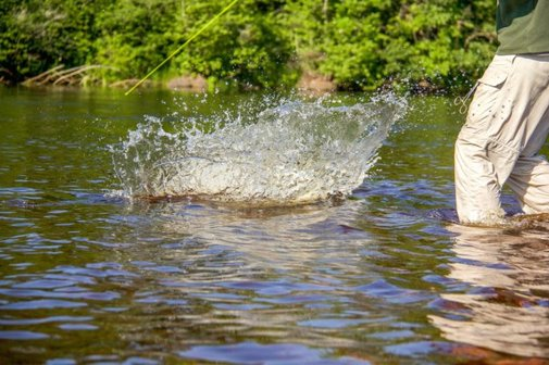 A Summer on the Fly – pt. 1   A Limitless Pursuit