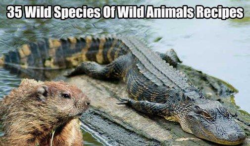 35 Wild Species Of Wild Animals Recipes - SHTF, Emergency Preparedness, Survival Prepping, Homesteading