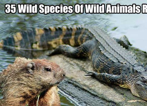 35 Wild Species Of Wild Animals Recipes - SHTF, Emergency Preparedness, Survival Prepping, Homesteading