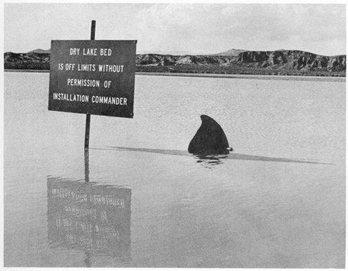 Shark Week - NASA's Armstrong Flight Research Center | Facebook