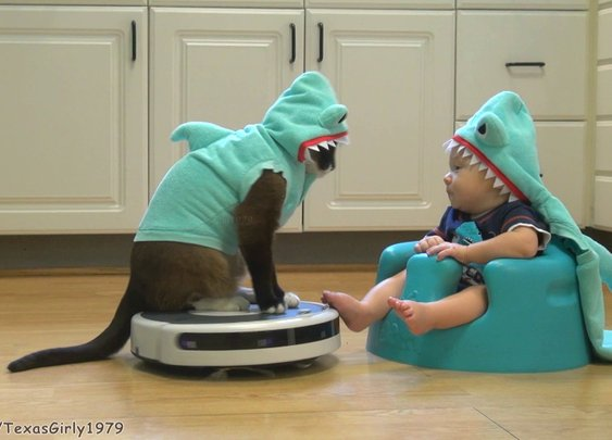 Cat Dressed as Shark on Roomba Entertains Baby