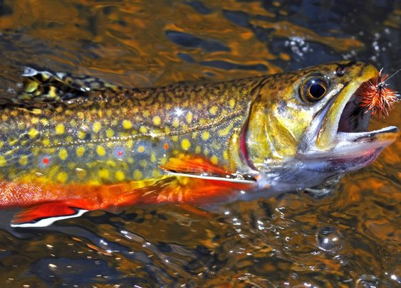 Beginner Fly Fishing Tips | Chucking Fluff