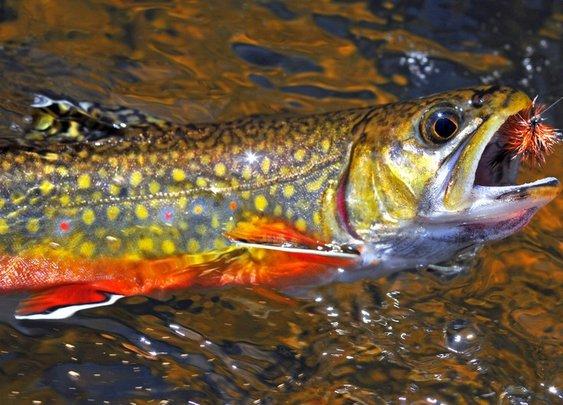 Beginner Fly Fishing Tips | Chucking Fluff