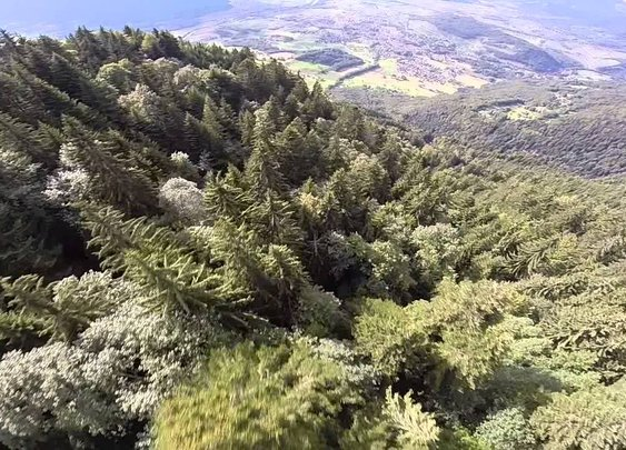 Wingsuit Flier Above the Mountains and Trees of the Alps
