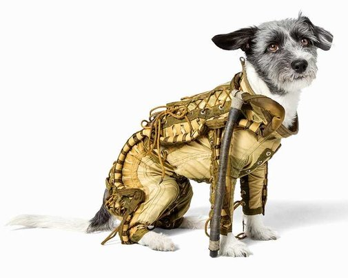 Used Soviet Dog Spacesuit Going Up For Auction