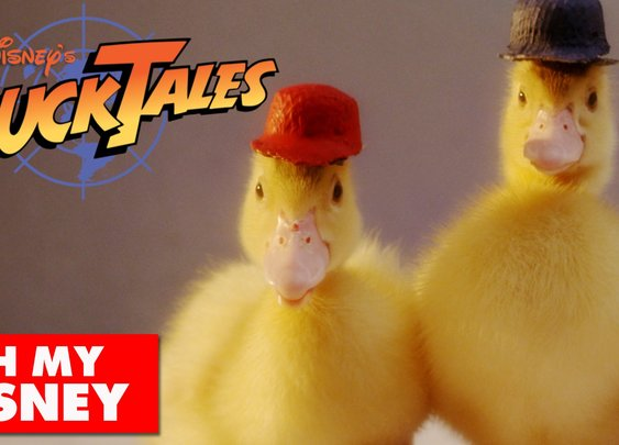 DuckTales Theme Song With Actual Ducks