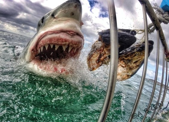 Stunning great white shark image 'just luck'