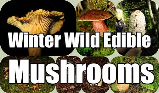 Winter Wild Edible Mushrooms - SHTF & Prepping Central