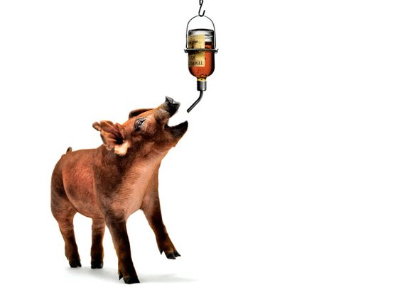 How to Raise a Pig That Tastes Like Whiskey - Popular Mechanics