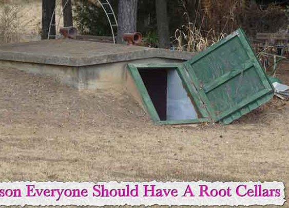 Reason Everyone Should Have A Root Cellars - LivingGreenAndFrugally.com