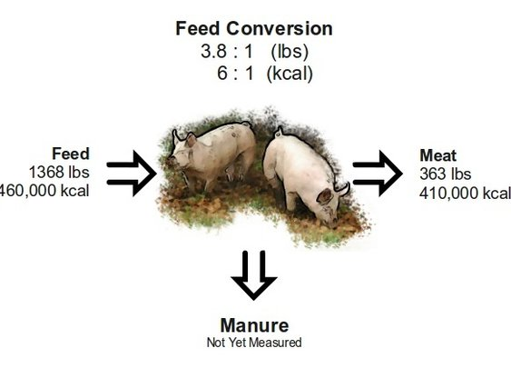 Complete Costs of Raising Pigs | Farm Folly