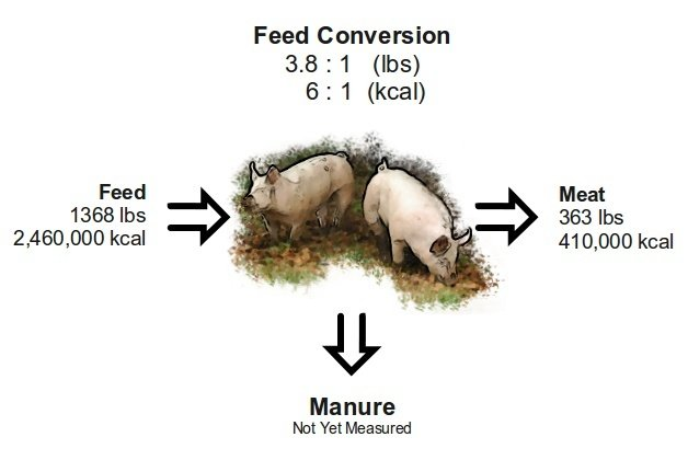 Complete Costs of Raising Pigs   Farm Folly