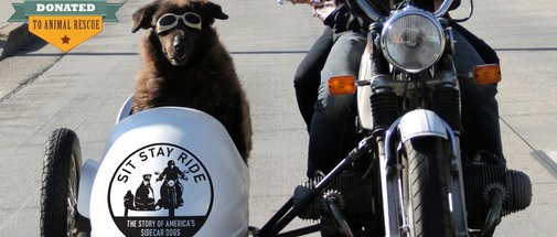 Sit Stay Ride: The Story of America's Sidecar Dogs | Official Trailer