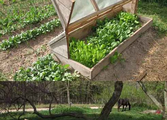 Garden Inspiration: Build an Amish Cold Frame - LivingGreenAndFrugally.com