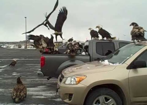 What Happens When You Leave A Box Of Fish In The Back Of Your Truck In Dutch Harbor, Alaska